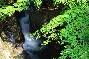 新緑の渓谷の写真素材 [FYI00367230]