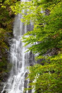 天滝渓谷の写真素材 [FYI00367285]