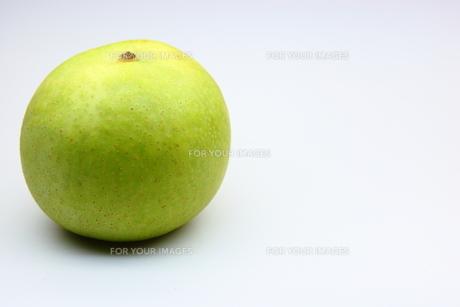 梨の写真素材 [FYI00367307]
