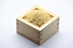 玄米の写真素材 [FYI00367345]