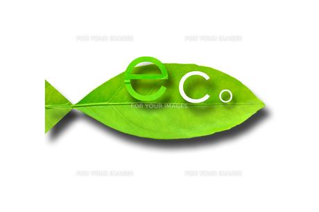 Eco Fishの素材 [FYI00367457]