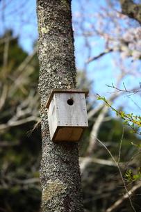 野鳥の巣箱の素材 [FYI00367537]