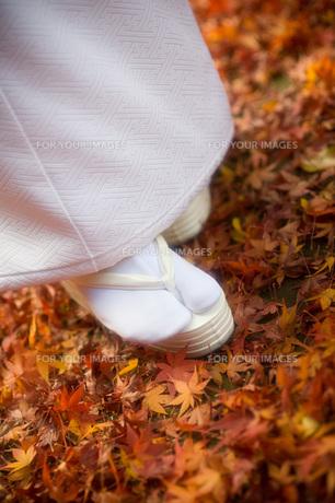 花嫁と紅葉の写真素材 [FYI00367721]