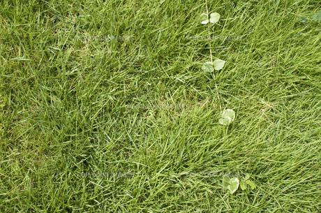 芝生の素材 [FYI00367927]