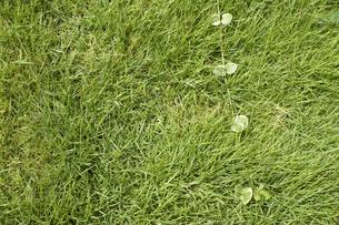 芝生の写真素材 [FYI00367927]