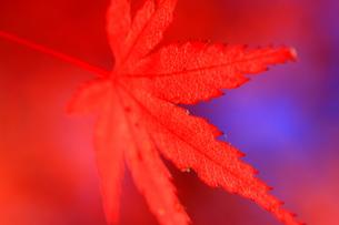 真っ赤な秋の写真素材 [FYI00368086]