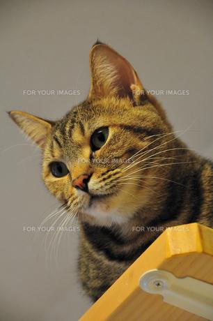 見下ろす猫の素材 [FYI00368092]