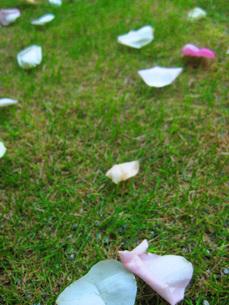 芝生の上の花弁の写真素材 [FYI00368637]