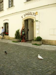 街角を歩く白いハトの写真素材 [FYI00368655]