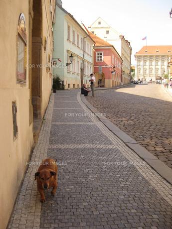 町を歩く老いぼれ犬の素材 [FYI00368661]