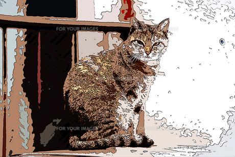 ネコの素材 [FYI00368809]