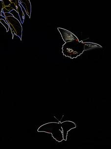 舞うクロアゲハのイメージの写真素材 [FYI00368812]