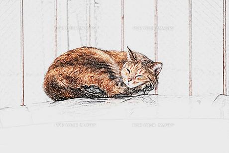眠る猫の素材 [FYI00368835]