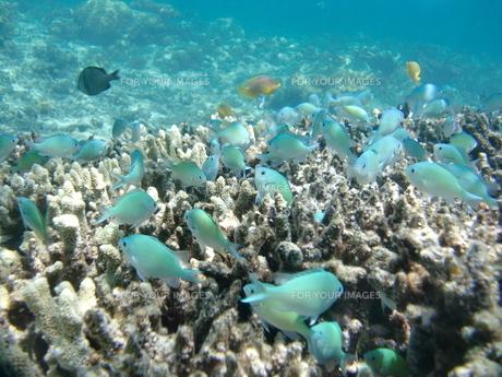 魚の楽園の写真素材 [FYI00368950]
