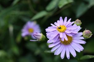 花と虫の写真素材 [FYI00368953]