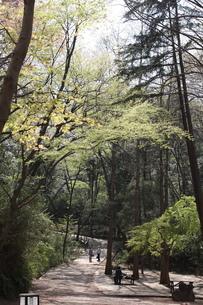 早春の生田緑地の写真素材 [FYI00368960]