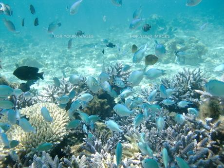 沖縄の海の中の写真素材 [FYI00368961]
