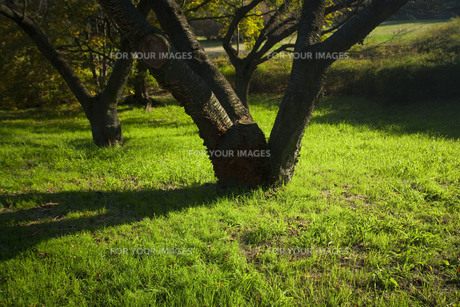 芝生の素材 [FYI00369417]
