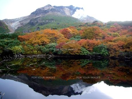 水面に映る、茶臼岳と紅葉の写真素材 [FYI00369685]