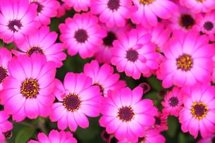 花々の写真素材 [FYI00369715]
