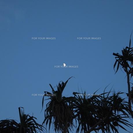 ヤシの木と月の写真素材 [FYI00369757]