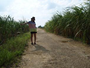サトウキビ畑と女性の写真素材 [FYI00369763]