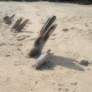 流木が並ぶの写真素材 [FYI00369764]
