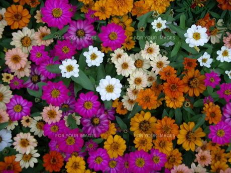 花の写真素材 [FYI00369771]