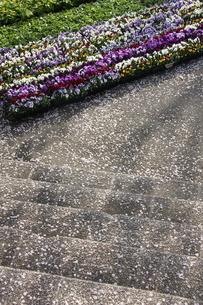 公園のお花畑の写真素材 [FYI00369867]