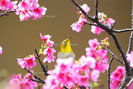 宮古島の春の素材 [FYI00370548]