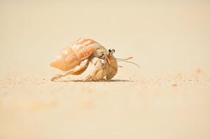 宮古島/前浜ビーチを歩くヤドカリの素材 [FYI00371663]