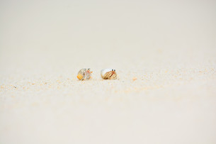 宮古島/白い砂浜のヤドカリの素材 [FYI00372841]