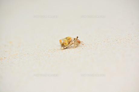 宮古島/白い砂浜のヤドカリと貝殻の写真素材 [FYI00372890]