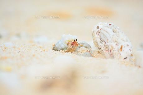 宮古島/白い砂浜のヤドカリと貝殻の写真素材 [FYI00372945]