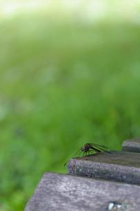 十和田湖畔 ベンチとトンボの写真素材 [FYI00376579]
