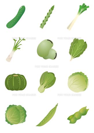 食材 野菜の写真素材 [FYI00376625]