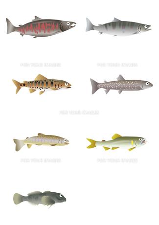 川魚イラストの写真素材 [FYI00376664]