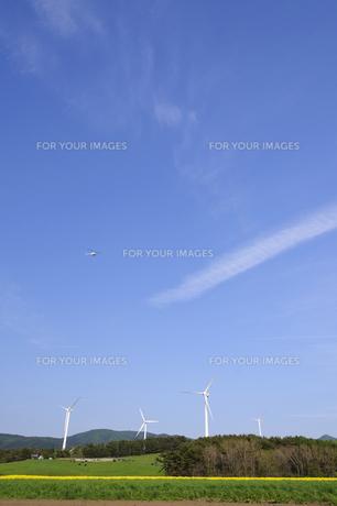 菜の花畑と風車の写真素材 [FYI00376918]
