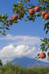岩木山と青森りんごの写真素材 [FYI00376960]