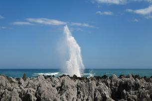 勢い良く上がる吹き潮の写真素材 [FYI00377073]