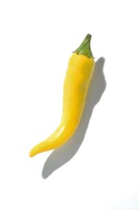 おもしろ野菜・黄唐辛子の写真素材 [FYI00377085]