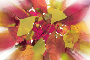 吹き寄せられた落ち葉の写真素材 [FYI00377087]