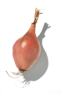 おもしろ野菜・エシャロットの写真素材 [FYI00377101]
