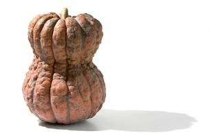 おもしろ野菜・鹿ヶ谷かぼちゃの写真素材 [FYI00377105]