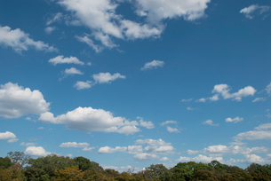 森の上の青い空と白い雲の写真素材 [FYI00377186]