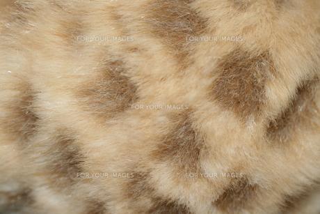 豹柄の毛の写真素材 [FYI00377388]