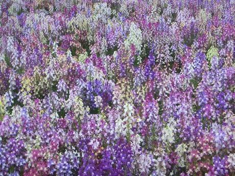 一面の花畑の素材 [FYI00377398]