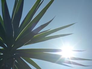 暑い日差しの素材 [FYI00377399]