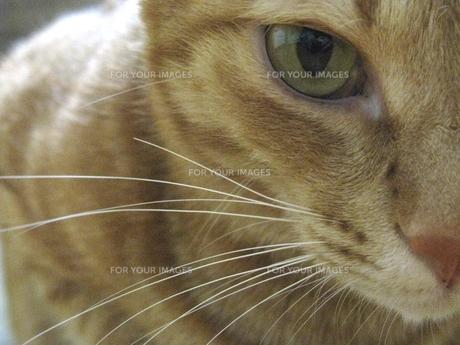 ネコの写真素材 [FYI00377427]