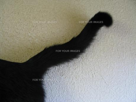 ネコのしっぽの写真素材 [FYI00377433]